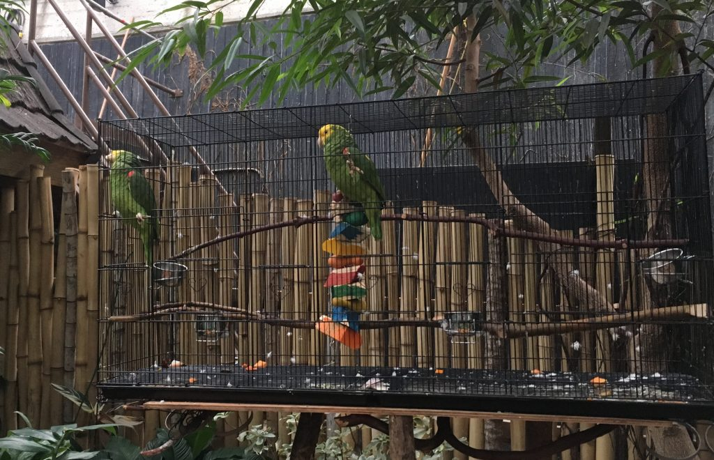 Give your views on bird welfare at the Bloedel Conservatory
