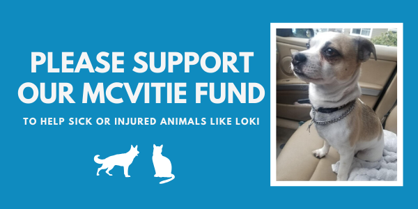 Help us reach our Matching Grant to help animals like Loki!