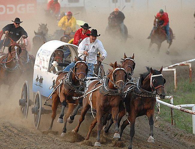 <br><strong>Chuckwagon racing</strong>