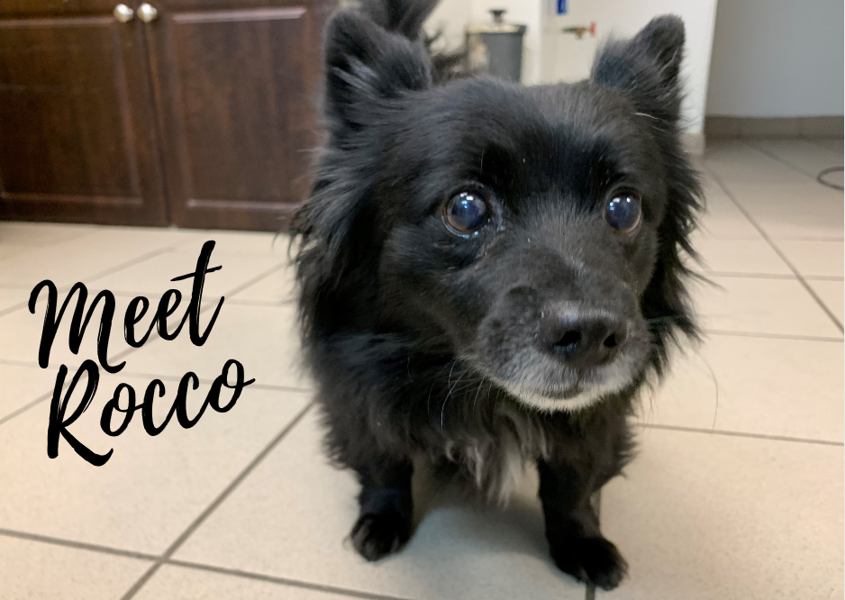 Rocco's story