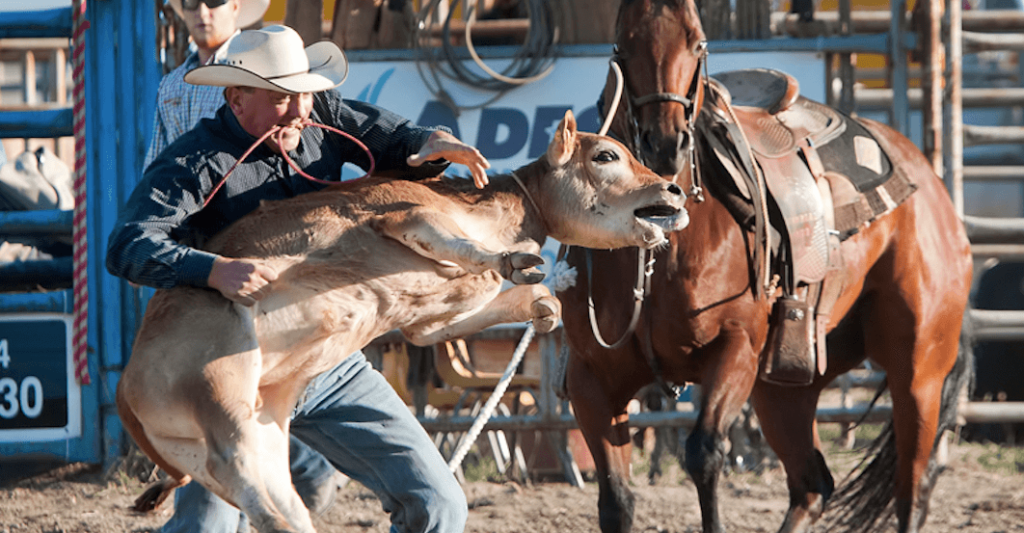 Why the CFL's Grey Cup rodeo is a huge marketing blunder